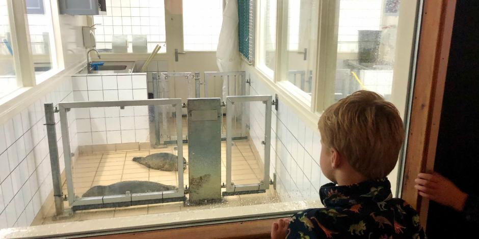 Groningen met kinderen | Zeehondencentrum Pieterburen | Kleine Reizigers