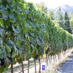 Pipe Dreams Winery | Kleine Reizigers