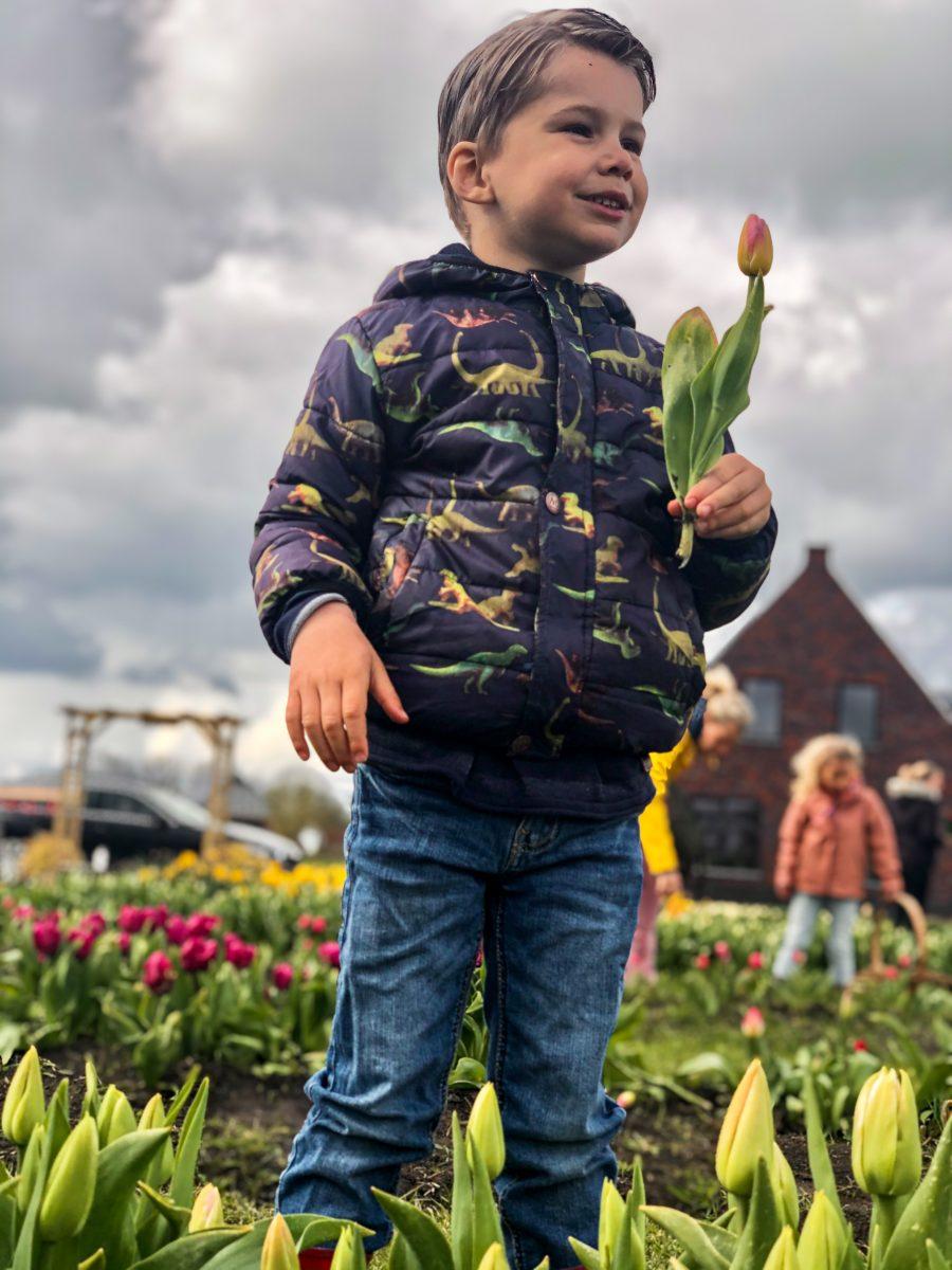 Waar kan ik tulpen plukken in Groningen? Bij Plukgeluk Grijpskerk. | Kleine Reizigers